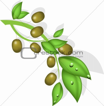 branch of the olive