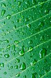 the texture of green leaf after rain