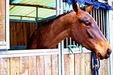 Haircut horse