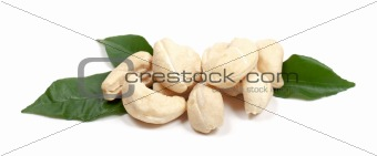 Cashew with leaf