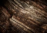 Old oak wood texture.