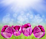 Spring background with tulips and sun