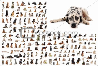 group of dogs and dalmatian