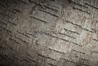 Aspen tree bark texture, closeup shot.