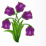 Vector illustration of lilac bells. Gradient meshes.