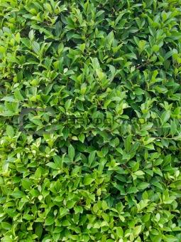 Green leave wallpaper