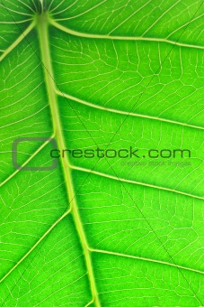 Close up image of green leaf