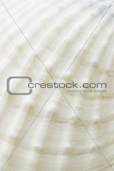 Background of sea shell surface texture