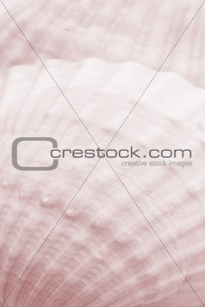 Background of sea shell texture