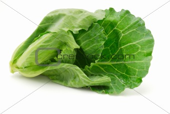 Cabbage shoot