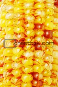 Close up of Indian corns