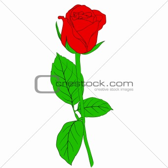 One red Rose in hand drawn style
