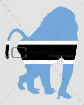 Baboon botswana