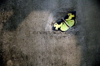 Concrete wall butterfly