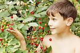 Boy holds cherries
