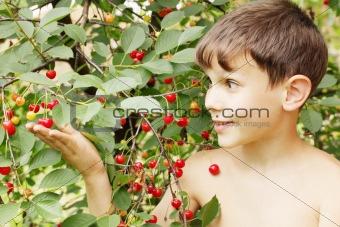 Boy holds cherries