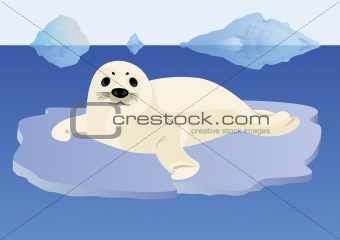A young seal on an ice floe