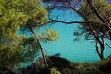 sea and beach tree