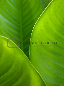 Green leaf background abstract