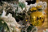 Golden apple on Christmas tree