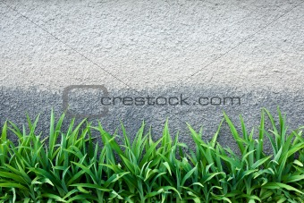 Green grass against a  wall