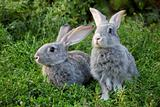 Couple of rabbits