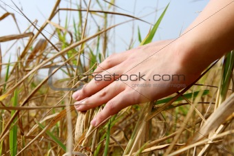 close up of a man's hand touching the grass, 'feeling nature'