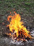 Flames fire