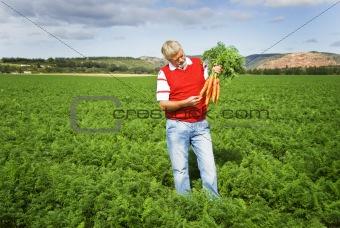 Carrot farmer in a carrot field on a farm