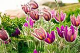 Flowers in Germany Saxony Findlingspark