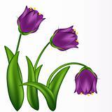 Lilac bells.