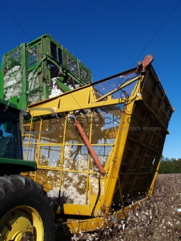 Cotton Picker Dumping