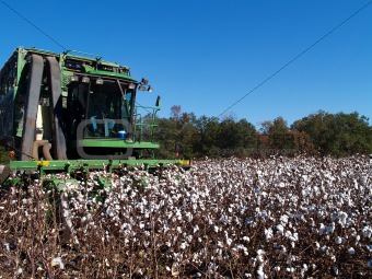 Cotton Picking
