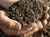 handful of soil