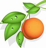 orange peach
