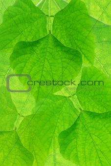 Abstract green leves background