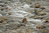 river flow over rocks