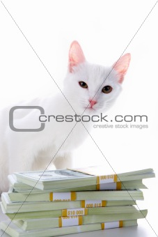 Cat with money