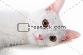 White pet