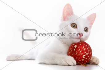 Cat with red toy