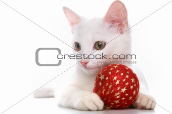 Cat with red ball