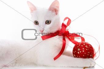 Decorated kitten