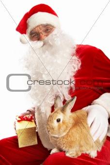 Year of rabbit