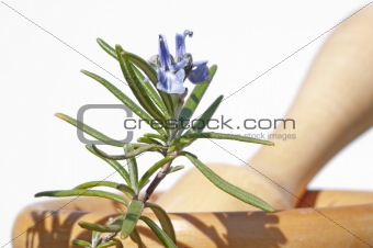 mortar with rosemary