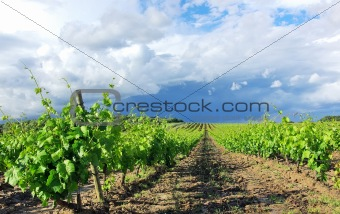 Thunderstorm in vineyard at portuguese field.