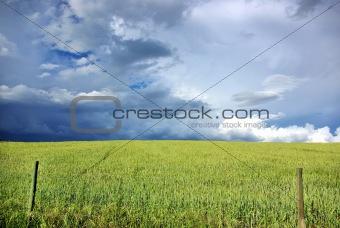 Thunderstorm wheat field.
