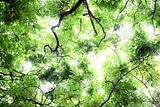 sky of fresh leaves