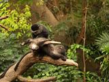 Monkey Looking for Fleas