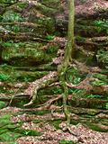 Vegetation on Canyon Wall