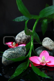 branch of bamboo, stones and orchids in water spa concept